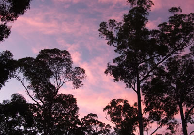 Sunset, Pinky red and blue sky with trees silhouetted